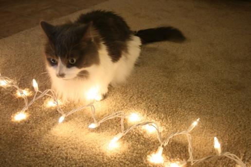 Baker_Christmas_Lights